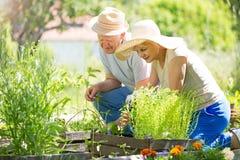 Jardinage aîné de couples Photo stock