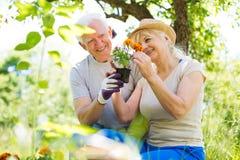 Jardinage aîné de couples Photos stock