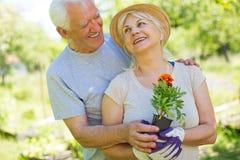 Jardinage aîné de couples Image stock