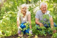 Jardinage aîné de couples Photo libre de droits