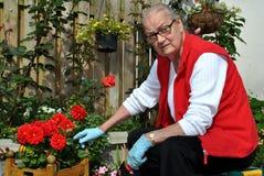 Jardinage aîné de dame Photographie stock libre de droits