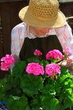 Jardinage aîné de femme Photographie stock libre de droits