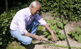Jardinage d'homme aîné images stock