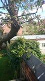 Jardinage de banc d'arbre Image stock