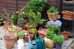Jardinage de conteneur Image stock