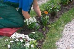 Jardinage de fille Photo stock