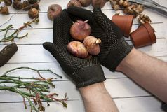 Jardinage de passe-temps Les mains masculines tiennent soigneusement la matière végétale Outils de jardinage neufs, plateau de ca Photos stock