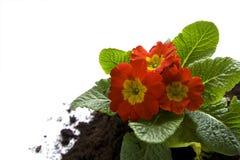 Jardinage de printemps Photos libres de droits