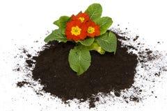 Jardinage de printemps Image libre de droits
