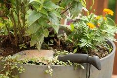 Jardinage de récipient Photographie stock