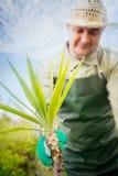 Jardinage de source Photos libres de droits
