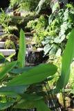 jardinage de ville Image stock