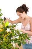 Jardinage - femme arrosant l'eau sur la fleur photographie stock libre de droits