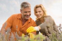 Jardinage mûr heureux de couples images stock