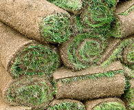 Jardinage : petits pains d'herbe de gazon photographie stock