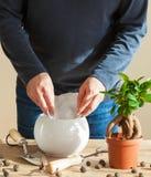 Jardinage, plantant à la maison homme replaçant la plante d'intérieur de ficus Photo stock