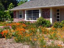 Jardinage sage de l'eau dans Calif Images stock