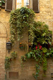 Jardinage sur vos murs Photos libres de droits