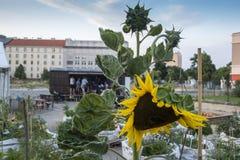 Jardinage urbain Photo stock