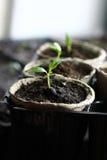 Jardinagem Imagens de Stock Royalty Free