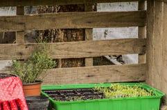 Jardinagem Foto de Stock