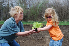 Jardinagem Imagens de Stock