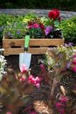 Jardinagem Caixa completamente de plantas lindos e de ferramentas de jardim prontas para plantar em Sunny Garden Trabalhos do jar Imagem de Stock Royalty Free