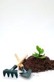 Jardinagem - cultivo de uma vida ou de uma idéia nova fotos de stock royalty free