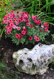 Jardinagem da casa Fotografia de Stock