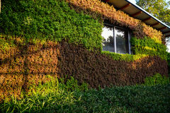 Jardinagem da casa verde Imagens de Stock Royalty Free