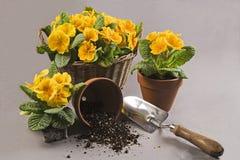 Jardinagem da mola Foto de Stock