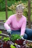Jardinagem da mulher mais idosa Foto de Stock Royalty Free
