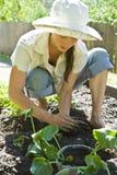 Jardinagem da mulher nova. Foto de Stock Royalty Free