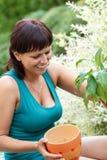 Jardinagem de sorriso feliz da mulher da Idade Média Foto de Stock