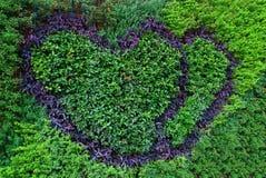 Jardinagem do amor Imagens de Stock