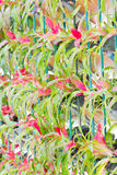 Jardinagem do vertical da bromeliácea. Fotografia de Stock
