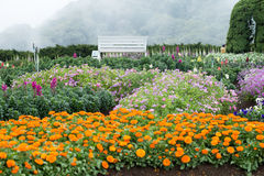 Jardinagem e ajardinar Foto de Stock Royalty Free