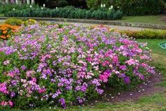 Jardinagem e ajardinar Imagem de Stock Royalty Free