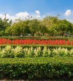 Jardinagem e ajardinar Fotografia de Stock Royalty Free