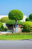 Jardinagem e ajardinar Fotografia de Stock
