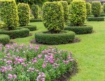 Jardinagem e ajardinar com árvores decorativas Imagens de Stock