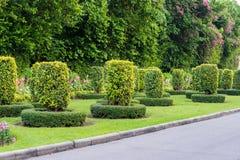 Jardinagem e ajardinar com árvores decorativas Fotos de Stock