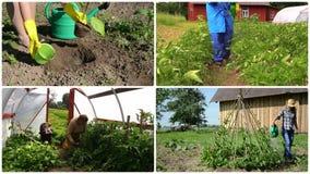 Jardinagem ecológica na exploração agrícola rural Colagem da metragem filme