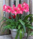 Jardinagem em pasta com beleza Fotos de Stock Royalty Free