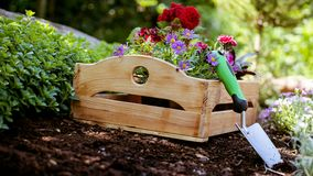 Jardinagem Ferramentas e caixa de jardim completamente de plantas lindos prontas para plantar em Sunny Garden O jardim da mola tr Imagens de Stock Royalty Free