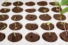 Jardinagem Home Imagens de Stock