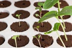 Jardinagem Home Imagens de Stock Royalty Free