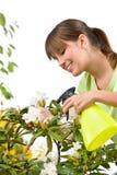 Jardinagem - mulher que polvilha a água no Rhododendron imagem de stock