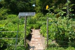 Jardinagem orgânica Fotografia de Stock Royalty Free