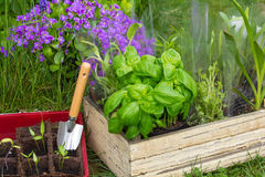 Jardinagem, plantas imagens de stock royalty free